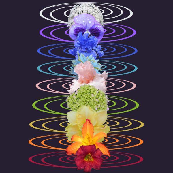 cakra-s und ihr Sitz, sowie ihre Farben
